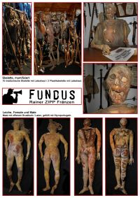 Fundus Collage 04
